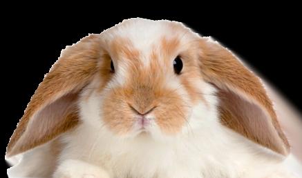 knaagdieren / konijnen