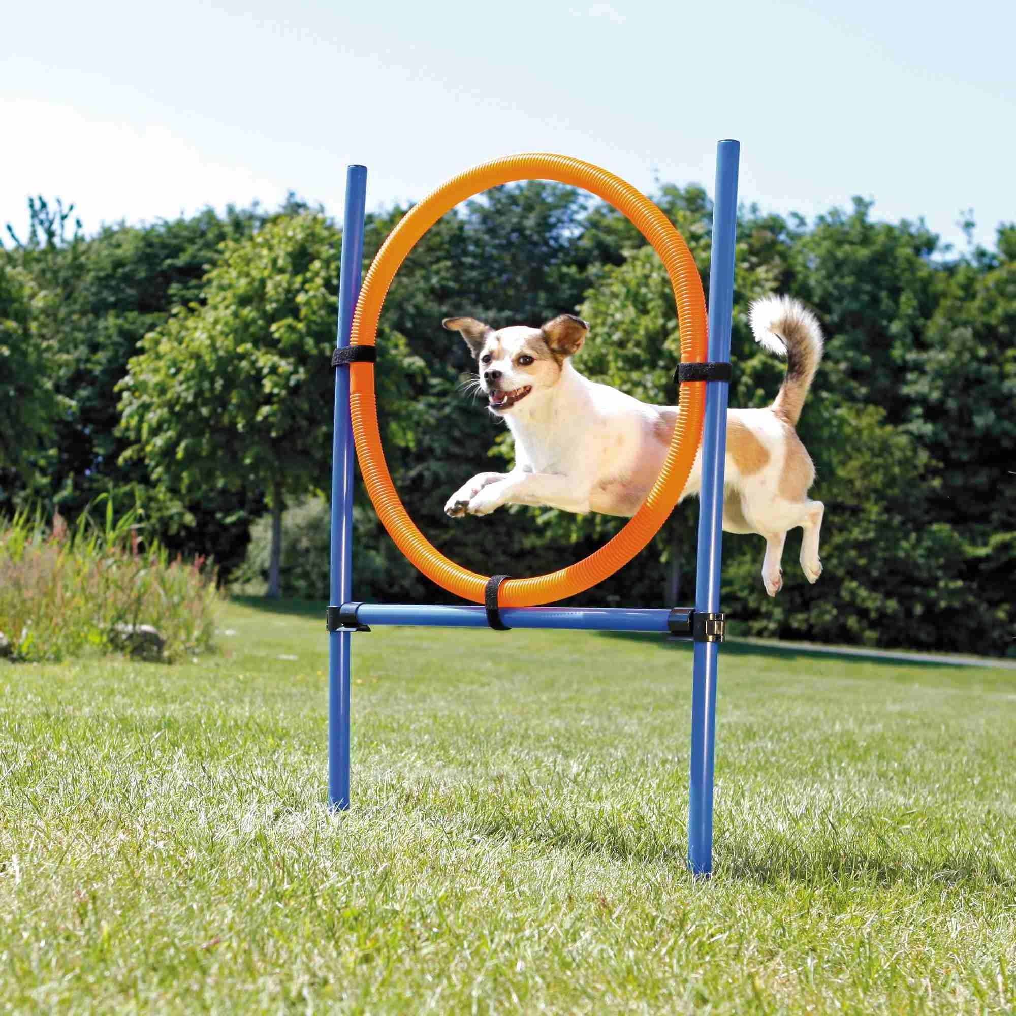 Trixie Dog Agility Ring, Kunststof 115x3cm  65cm Blauw