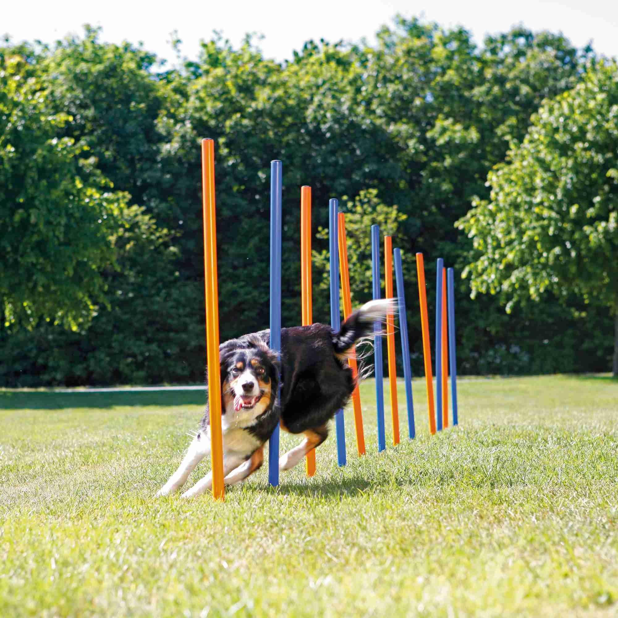 Trixie Dog Agility Slalom, Kunstof 3x115cm 12stuks