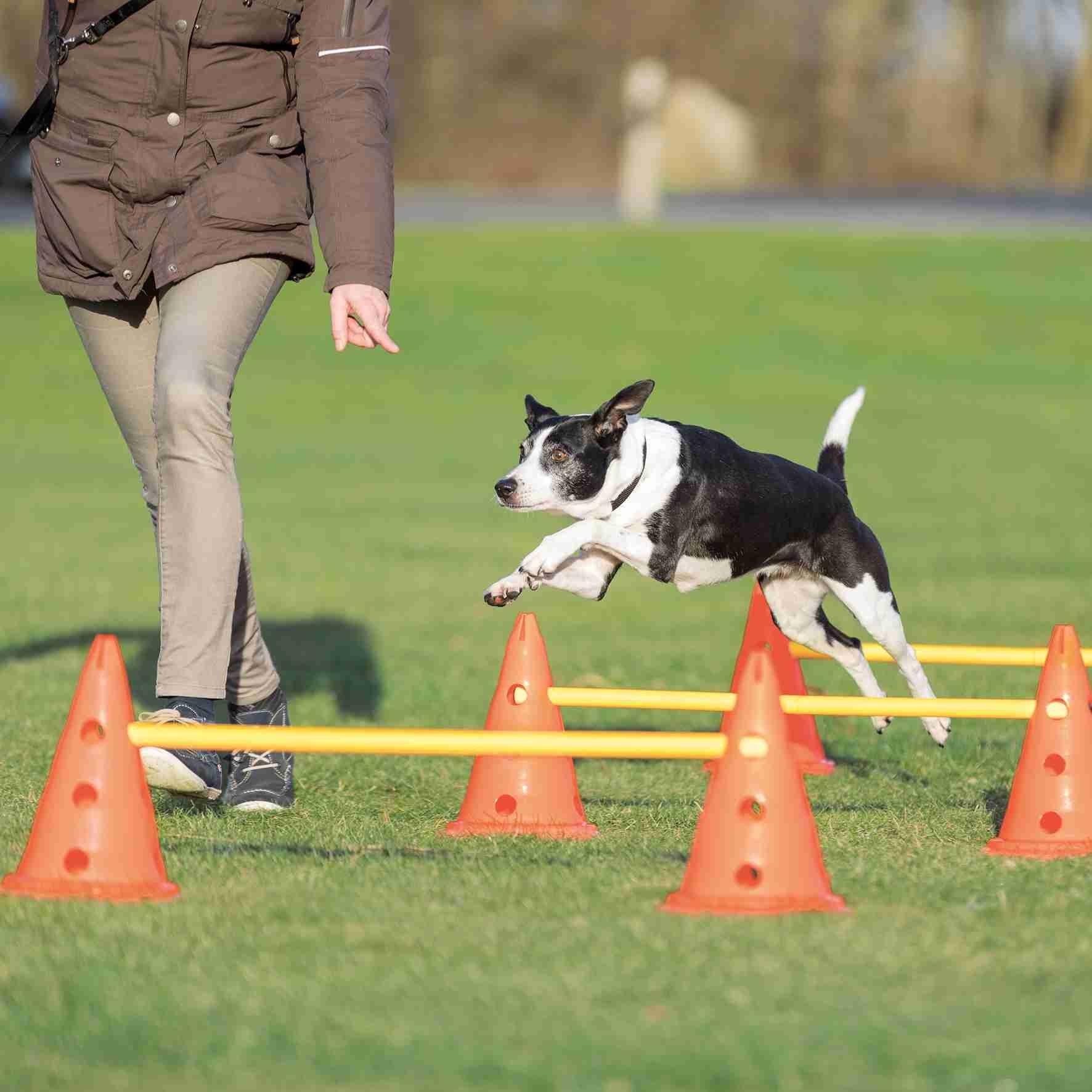 Trixie Dog Agility Hindernissen 3st 23x3cm 78cm Oranje/Geel