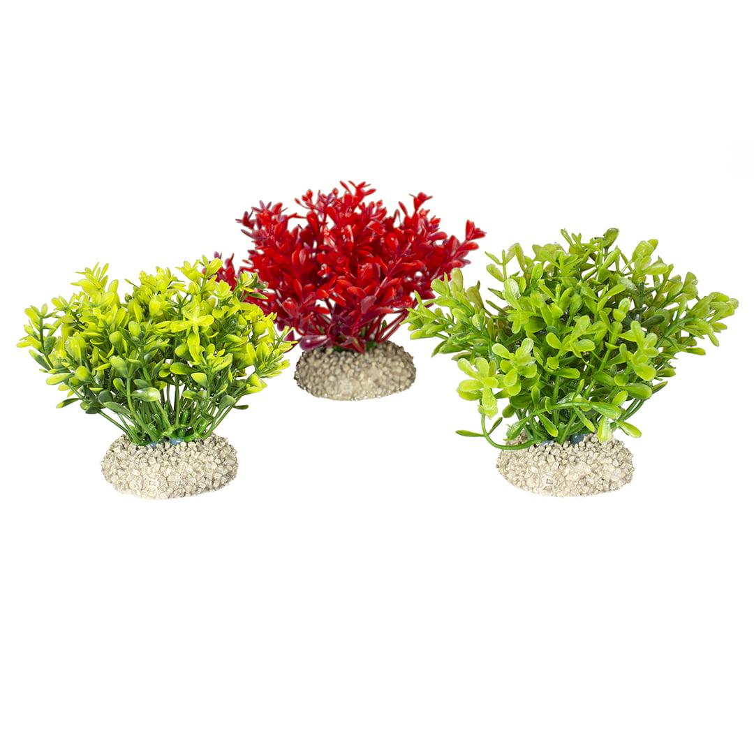 Duvo Plant Glosso -S- Natural