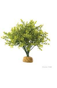 Ex plant Palmboom