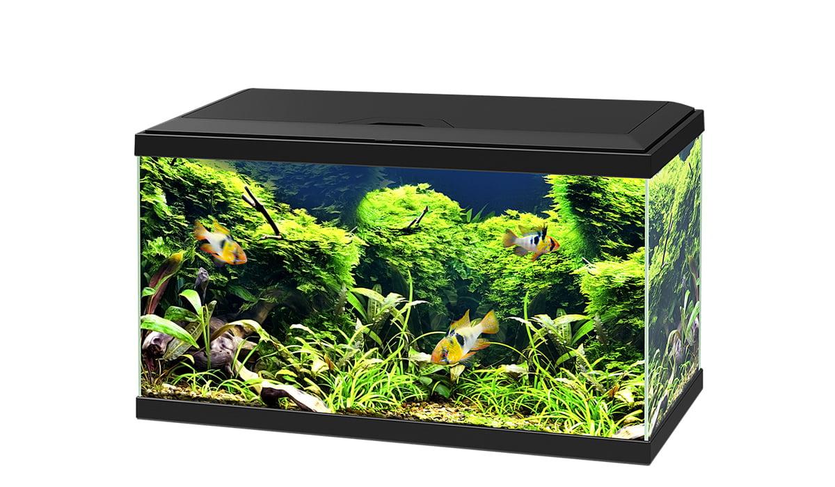 Ciano Aquarium Led 54 ltr 60cm