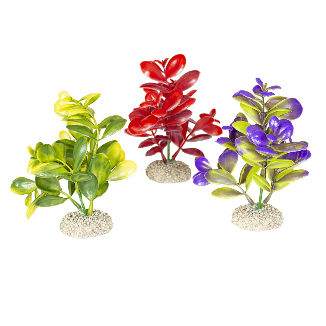 Duvo Plant Crasulla -M-